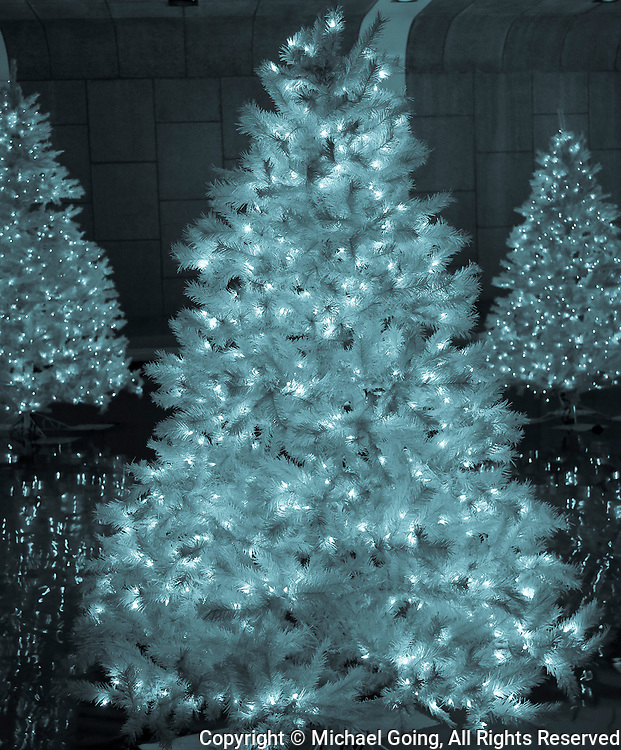 Blue green Xmas tree with lights with two lighted xmas trees in background