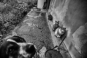 Dogs and cats of Zenu Cornea in Rosia Montana, Transilvania. If the romanian government change the law most of the houses of the village will be destroyed to start  with the pit air open mine of gold, the biggest one in Europe.