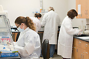 Sarah Schultheis works in the Missing Persons Lab at the UNT Health Science Center in Fort Worth, Texas on July 15, 2014. Known as the DNA Team, they produces genetic data from recovered unidentified human remains, missing persons cases and samples provided by families for kinship analysis, to assist various agencies and input the results into an online database making the results easily accessible to others.  (Cooper Neill for Newsweek)