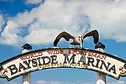Brown Pelican at Bayside Marina, Islamorada, Florida Keys, USA
