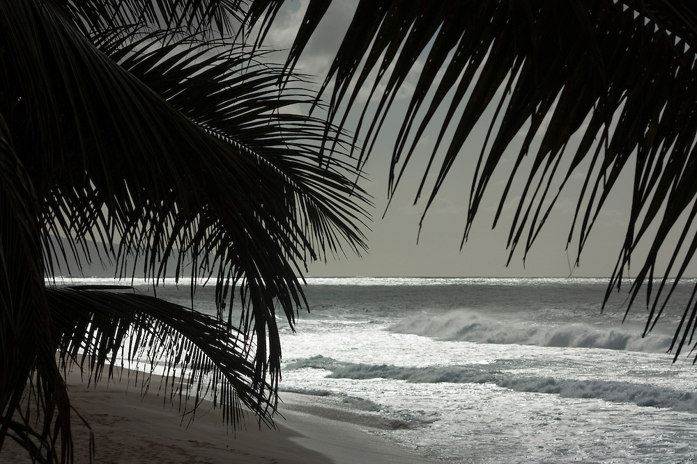 Surf and silhouetted palm trees