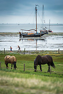 Vlieland, Friesland, Waddenzee, Netherlands, August 2015. The Wadden Sea is an intertidal zone in the southeastern part of the North Sea. It lies between the coast of northwestern continental Europe and the range of Frisian Islands, forming a shallow body of water with tidal flats and wetlands. It is rich in biological diversity. In 2009, the  Waddenzee was added to the UNESCO World Heritage List. Photo by Frits Meyst / Meystphoto.com