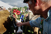 An admirer pats a dressy Holstein cow in Buching. The Allgau is the center of Germany's dairy industry. Bavarian dairy farms tend to be small (25 cows on average), yet the Bavarian Milk and Dairy Center in nearby Kempten is state-of-the-art, studying all aspects of breeding, feeding, production and pricing.
