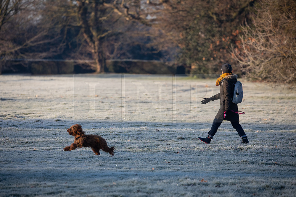 © Licensed to London News Pictures. 31/01/2019. London, UK. A walker and her dog in Greenwich Park in south east London on a frosty, clear morning. Temperatures in London reach minus three degrees Celsius last night. Photo credit : Tom Nicholson/LNP