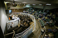 Cattle Auctions
