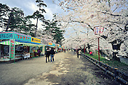 Hirosaki castle park in the spring time. Wonderful cherry blossoms flank the moat.<br />