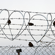 Greece with Doctors of the World (Medecins du monde). Idomeni, border crossing Greece and Macedonia (Fyrom). Refugees come on buses from Athens (costs 20 euros). Razor wire coils mark the border.