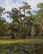 Caddo Lake, Texas