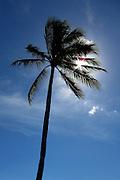 The sun shines through a palm tree on Waikiki Beach.