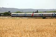 Israel, Valley of Elah, Train rushes through a ripe wheat field
