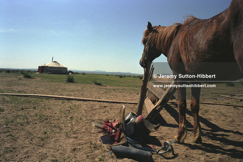 A horse stands tethered outside a nomad's ger ( a white felt tent), the traditional type of housing on the steppes. Mongolian steppe.