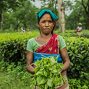 Tea garden workers outside Udalguri, Assam state, India