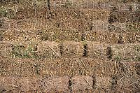 Ogni anno, il 26 Gennaio, a Porto Cesareo, localit&agrave; di mare vicino Lecce, si festeggia Sant' antonio Abate, protettore degli animali e specialmente dei cavalli. La sera viene accesa la grande focara alta 12 metri e costruita da due famiglie del posto. Quest' anno &egrave; stata la settantaquattresima edizione.<br /> <br /> Every year, January 26, in Porto Cesareo, a seaside resort near Lecce, celebrates Sant 'antonio Abate, patron saint of animals, especially horses. The evening is lit the great Focara 12 meters high and was built by two local families. This year 's edition was 74th