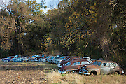 Americana - Ford, Chevrolet, Pontiac, Dodge  limos in graveyard of abandoned rusty old American automobiles, MIssissippi, USA