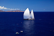 Twizzle sailing past humpback whales during the Caribbean Superyacht Regatta and Rendezvous, race 2.