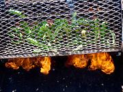 U.S.A., New Mexico. Albuquerque. Sichler Farms. Roasting green chile.