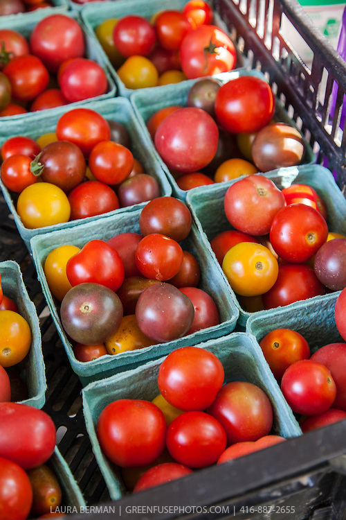 A colourful mix of hand-picked heirloom tomatoes at a farmers market.
