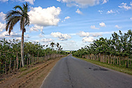 Country road with living fences in Pinar del Rio, Cuba.