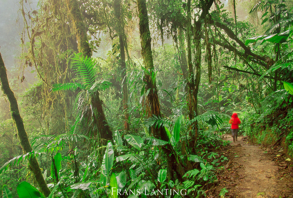 Hiker in cloud forest, Monteverde Cloud Forest Preserve, Costa Rica