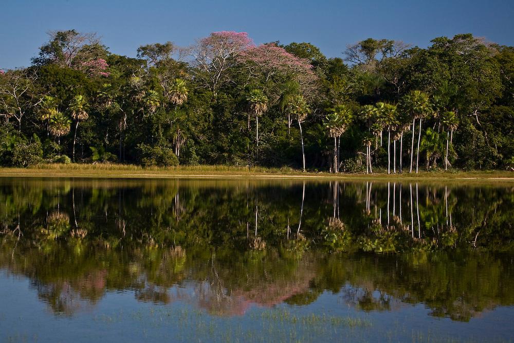 Aquidauana_MS, Brasil...Mata ciliar de um lago na fazenda Rio Negro no Pantanal...The lake riparian in Rio Negro farm in the Pantanal...Foto: JOAO MARCOS ROSA / NITRO