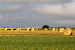 Hay is cut, rolled and left in the field to be collected and stacked on a different day in Northwest Nebraska