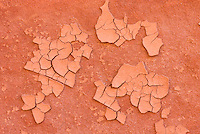 Flakes of mud on walls of Buckskin Gulch Paria Canyon-Vermilion Cliffs Wilderness Arizona