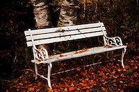A lonely bench surrounded by the lovely Nova Scotia autumn leaves.