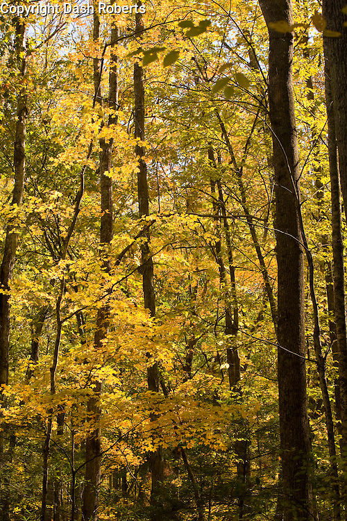 Fall colors in the Great Smoky Mountains National Park - Oct. 2008.