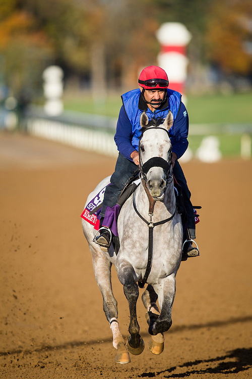 October 29, 2015:  Kobe's Back, trained by Peter A. Eurton and owned by CRK Stable, LLC, exercises in preparation for the Breeders' Cup Sprint at Keeneland Race Track in Lexington, Kentucky. Alex Evers/ESW/CSM