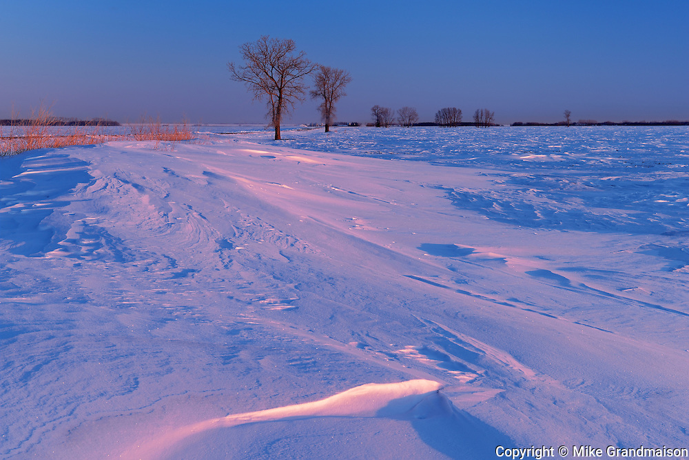 WInd blown prairie landscape in winter at sunrise<br /> Grande Pointe<br /> Manitoba<br /> Canada