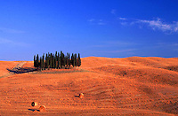 Cypresses in Tuscany