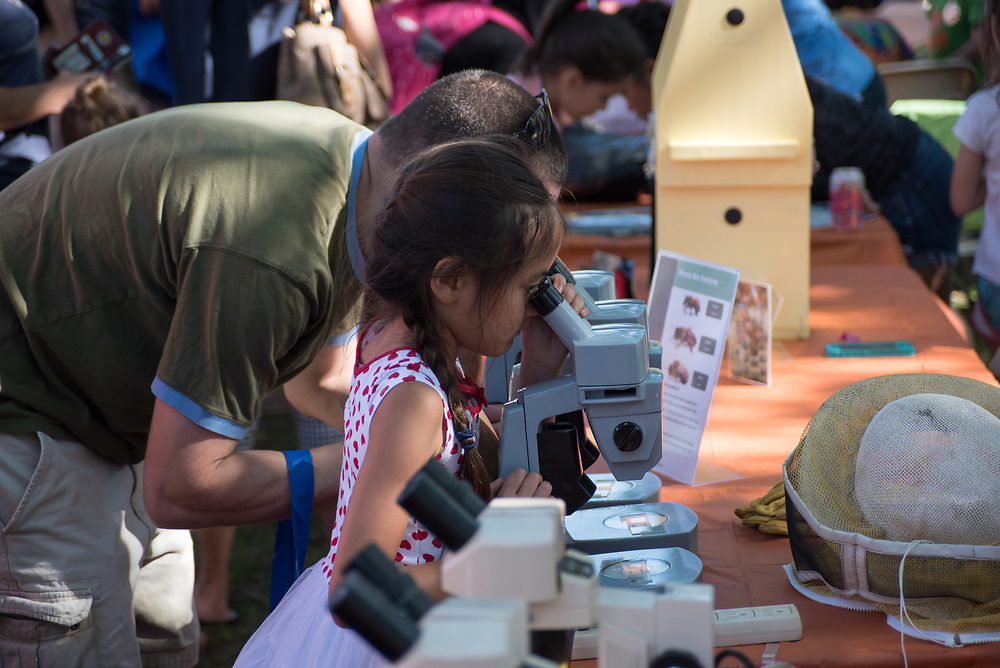 9/24/17 – Medford/Somerville, MA – Child observes a specimen through microscope during Tufts Community Day on September 24. (Seohyun Shim / The Tufts Daily)