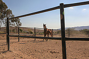 Horse runs in a corral Photographed in the Negev Desert, Israel