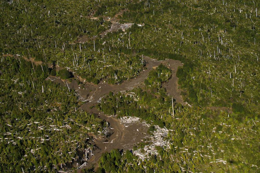 Forestland which burnt six years earlier near Puerto Montt, Chile, Feb. 12, 2004. Daniel Beltra/Greenpeace.