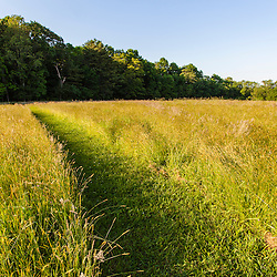 A mowed trail in the hay field at Phillips Farm in Marshfield, Massachusetts.