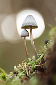 Plant Life and Botanical Photography
