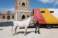"VENICE, ITALY - 12 MAY 2017: A horse takes part of a performance at the 57th International Art Exhibition in Venice, Italy, on May 12th 2017.<br /> <br /> <br /> The 57th International Art Exhibition, titled VIVA ARTE VIVA and curated by Christine Macel, is organized by La Biennale di Venezia chaired by Paolo Baratta. ""Viva Arte Viva is an exclamation, a passionate outcry for art and the state of the artist. Viva Arte Viva is a Biennale designed with artists, by artists and for artists, about the forms they propose, the questions they ask, the practices they develop and the ways of life they choose"", Christine Macel says. <br />  <br /> Rather than broaching a single theme, Viva Arte Viva offers a route that moulds the artists' works and a context that favours access and understanding, generating connections, resonances and thoughts. VIVA ARTE VIVA will unfold over the course of nine chapters or families of artists, beginning with two introductory realms in the Central Pavilion, followed by another seven across the Arsenale through the Giardino delle Vergini. 120 are the invited artists from 51 countries; 103 of these are participating for the first time. <br /> <br /> The Exhibition will also include 85 National Participations in the historic Pavilions at the Giardini, at the Arsenale and in the historic city centre of Venice. 3 countries will be participating for the first time: Antigua and Barbuda, Kiribati, Nigeria."