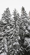 Winter in the forest, norwegian woodlands.