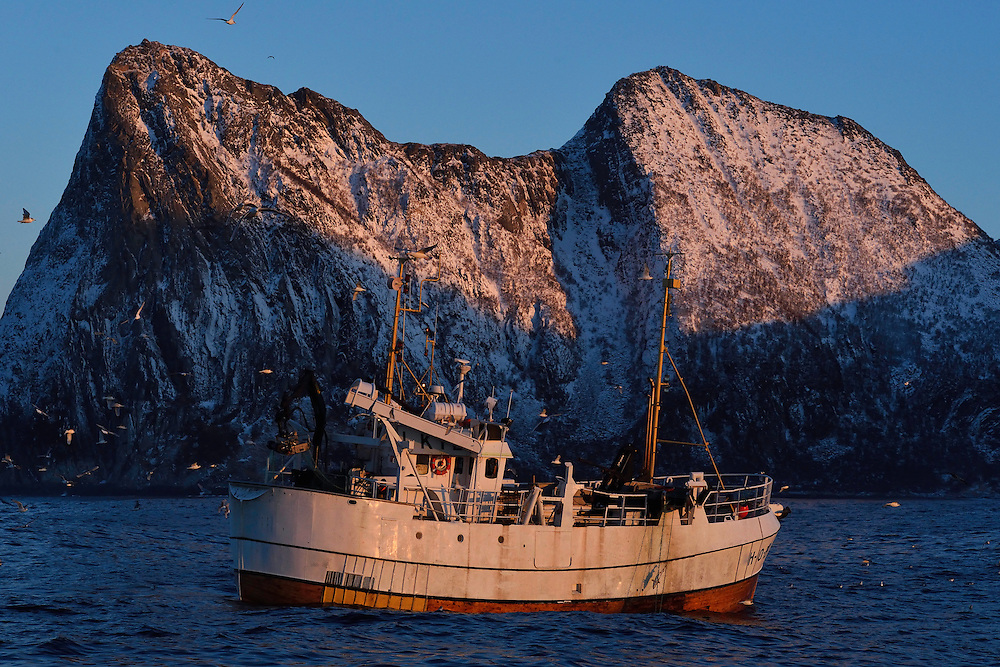 """Fishing boat fishing for the large cod or """"Skrei"""", Gadus morhua, that come here to eat herring in the winter, Senja, Troms county, Norway, Scandinavia"""
