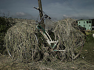 Farmer's bicycle loaded with straw. Vietnam, Asia