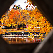 Looking out towards the river from the covered bridge, the fall foliage is on display. Photo by Claire Teri