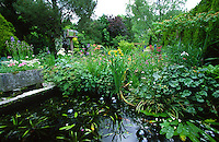 large fish pond in garden with goldfish and koi carp