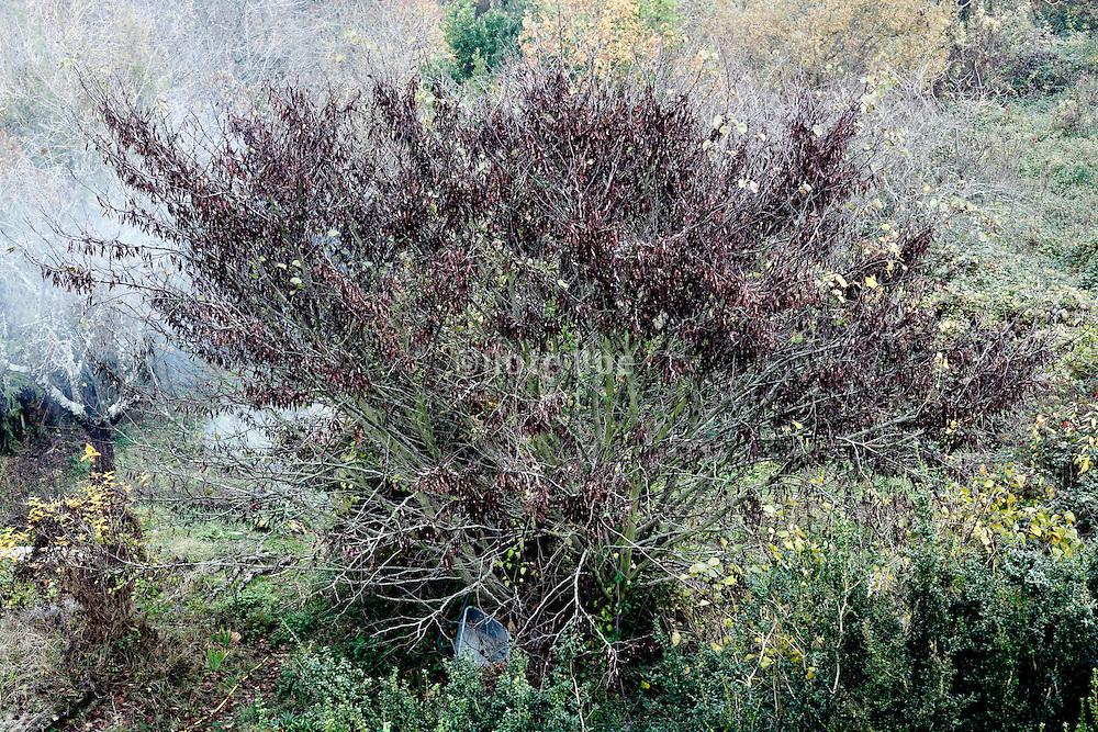 garden tree with smoke
