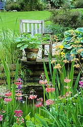Seat by the pond with rodgersias, hostas, primulas and iris.