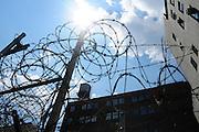 Wild Razor Wire in East Harlem