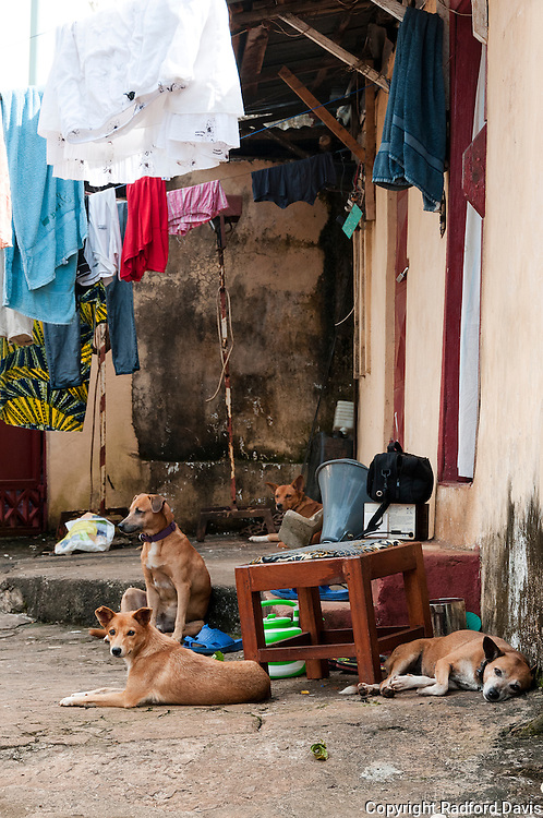Dogs roam in Freetown, as seen here. These dogs are lounging just outside the only veterinary clinic in Freetown. There are only 5 veterinarians in all of Sierra Leone, and only 1 of these works with animals, and that is on a part-time basis. Dr. Gudush Jalloh runs the nonprofit organization the Sierra Leone Animal Welfare Society, which strives to reduce and control dog populations through spay and neuter. They also vaccinate the dogs against rabies, when they have the vaccine that is, which is hard to get. Dogs are often used for security, or even hunting in rural areas. But rabies occurs everywhere in the country.