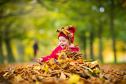 © Licensed to London News Pictures. 30/10/2016. Leeds UK. 18 month old Scarlet plays in the fallen leaves at Temple Newsam Park in Leeds. Photo credit: Andrew McCaren/LNP