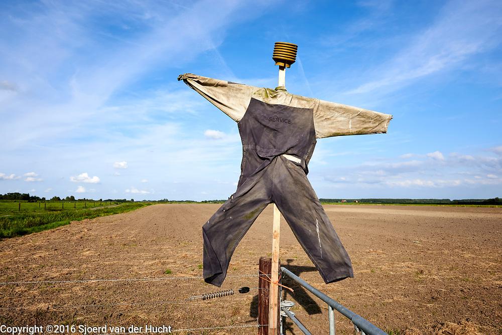 Vogelverschrikker op een veld in de polder - Scarecrow in a field in the polder of the Netherlands