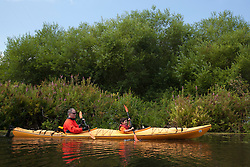 North America, United States, Washington, Bellevue, man and son (age 6) kayaking in Mercer Slough Nature Park.  MR