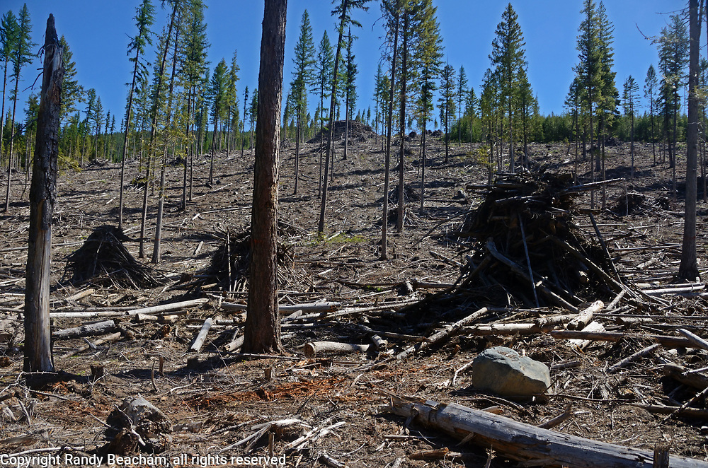 Clearcut and slash piling for slash burning from the Buckhorn logging project on the Kootenai National Forest, June 2017. Yaak Valley in the Purcell Mountains, northwest Montana.